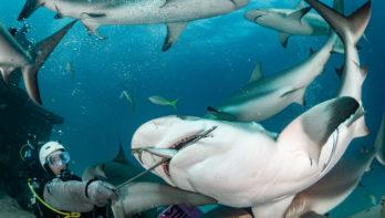 Bijzonder duiken op de Bahama's