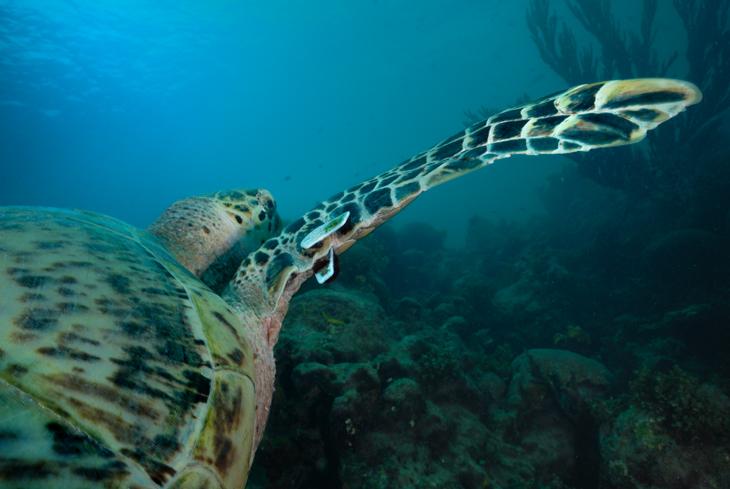 schildpad klein bonaire sea turtle