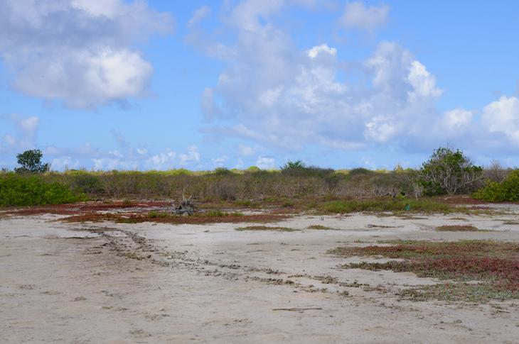 karetschildpad Klein Bonaire
