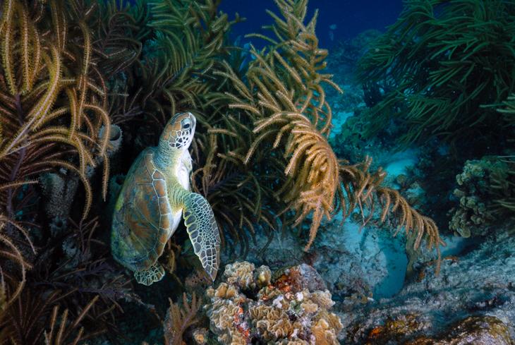 sea turtle klein bonaire schildpad
