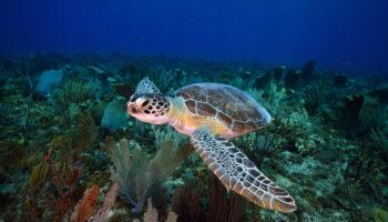 Bonaire afvalwater koraal