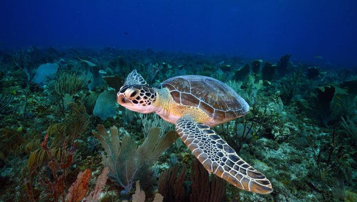 Geen ongezuiverd afvalwater meer op Bonaire