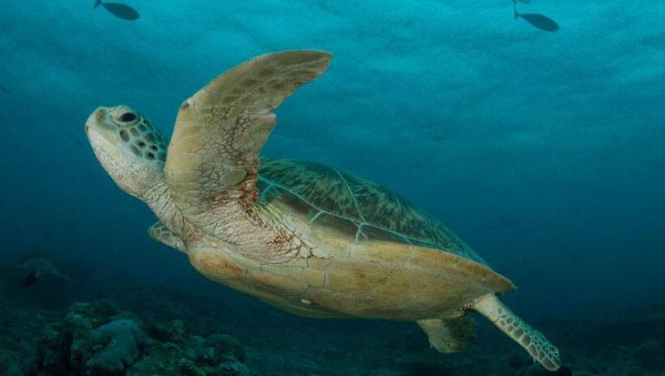 Tortuga, natuurfilm over zeeschildpadden