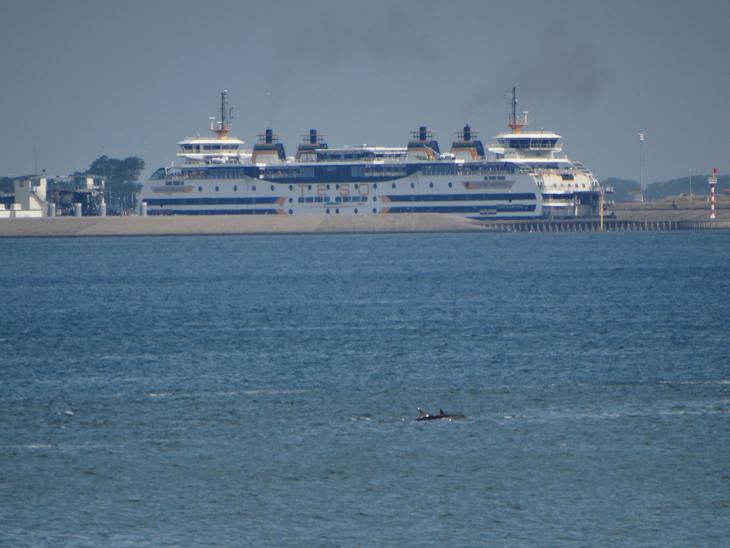 groep dolfijnen