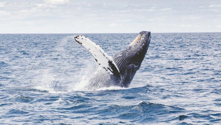17 procent van al het zeeleven mogelijk verdwenen tegen het einde van de eeuw