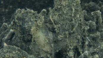 Grootschalige sterfte van dieren in Grevelingenmeer