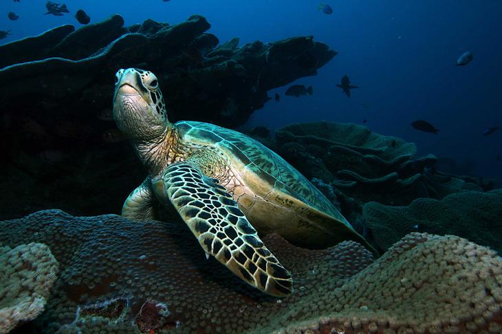 Bastianos Dive Resort