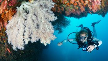 Malediven zacht koraal wit