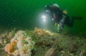 Duikers in de Noordzee