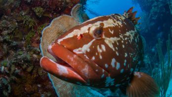 An unBelizeble trip at the Aggressor in Belize