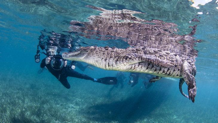 Snorkelen met krokodillen in Cuba met Avalon