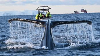Lezersreis - Orca Camp 2020