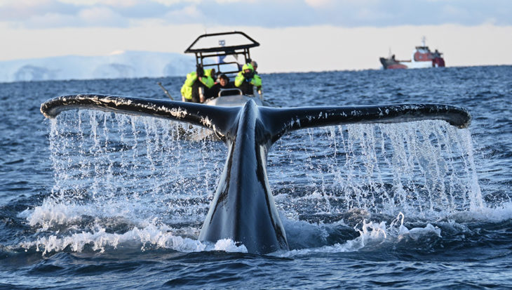 Lezersreis – Orca Camp 2020