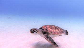 Rebel Diving Curaçao