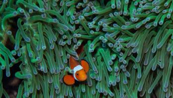 Nemo blijkt niet opgewassen tegen klimaatverandering