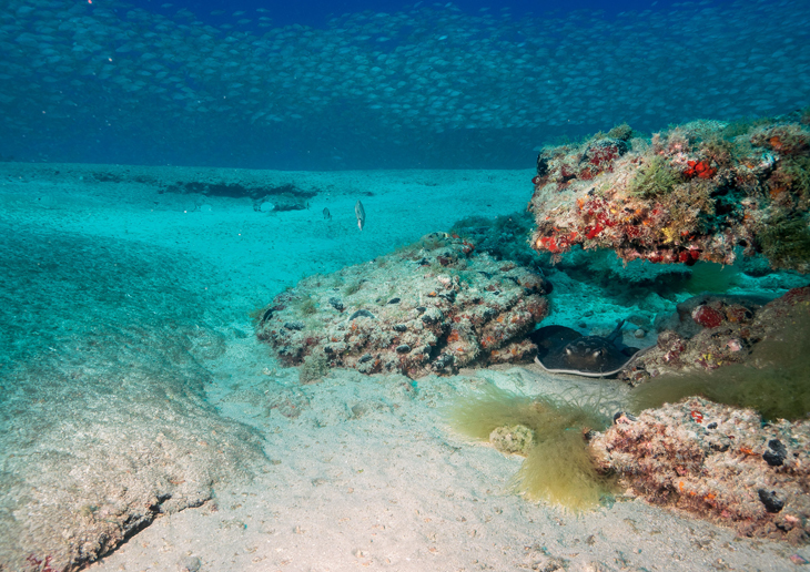 Scuba Sur Diving Gran Canaria