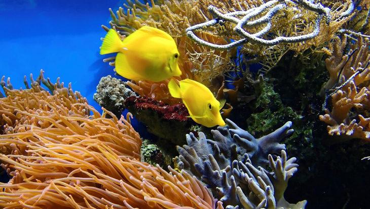 Hoe een luidspreker zwaar beschadigd koraal kan redden