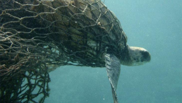 Lichten op visnetten redt schildpadden en dolfijnen