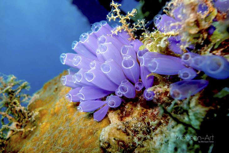 onderwaterbergen
