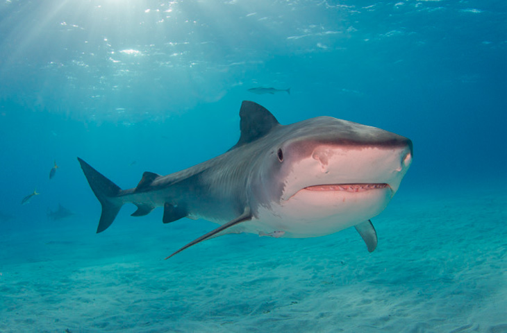 Haai Zuid Afrika