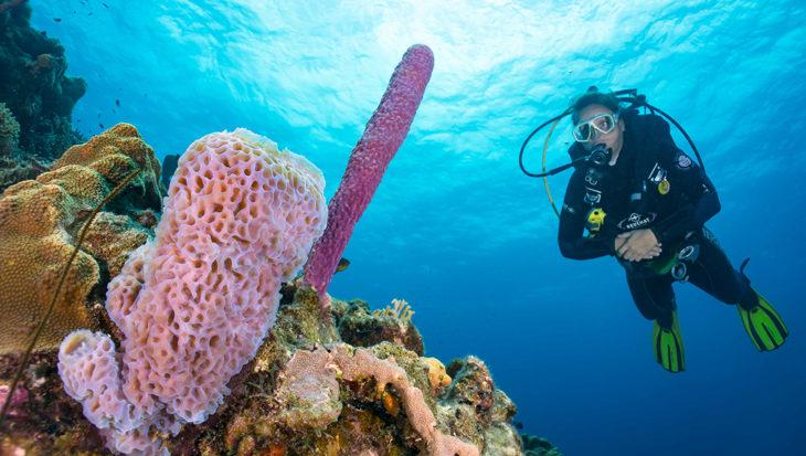 Bonaire: 86 duikplekken om te verkennen…