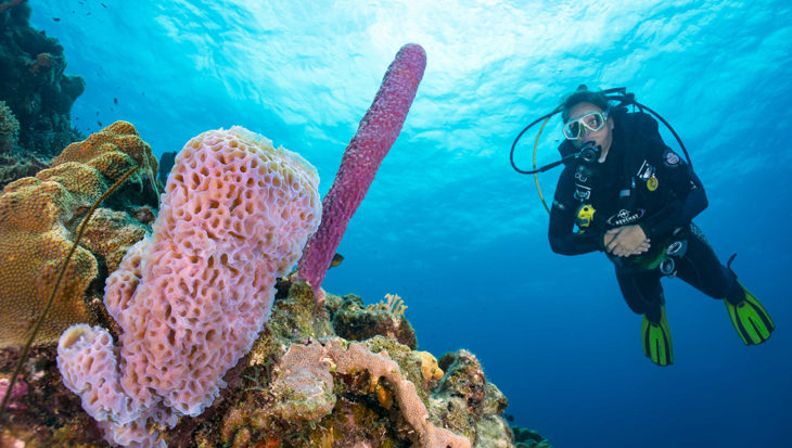 Divers Paradise Bonaire biedt 24/7 duiken