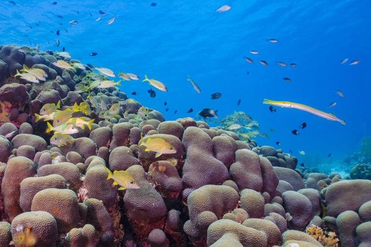 Divers Paradise Bonaire