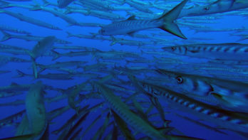 Evasioni Blu Diving op het mooie Sicilië