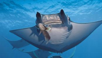 Wahoo Diving, verliefd op Santa Maria