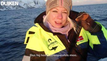 Orca Camp: snorkelen met orka's in Noorwegen
