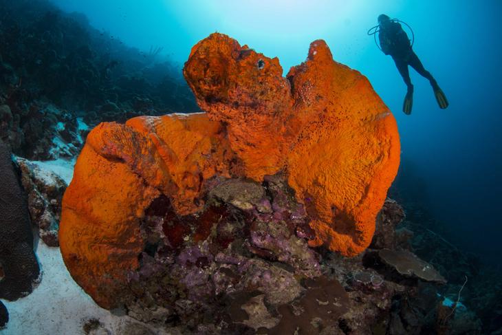 koraal planten