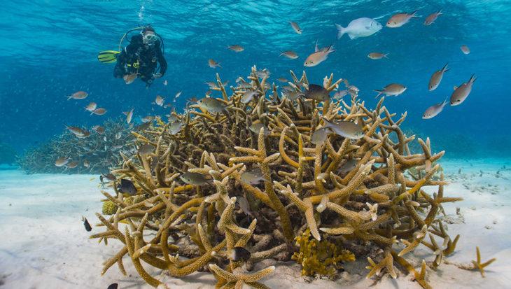 Zelf koraal planten op Bonaire