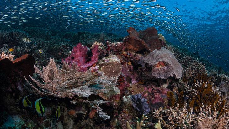 Coral Explorers Week bij Papua Explorers