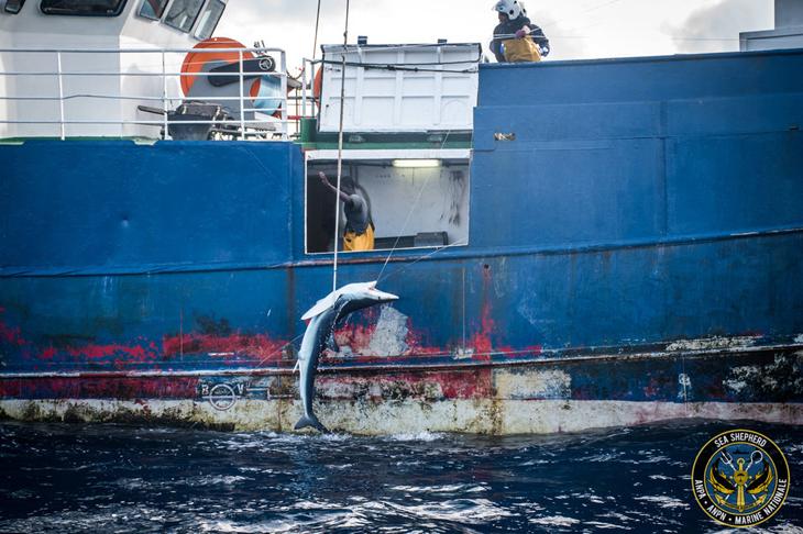 haaienvinnenhandel