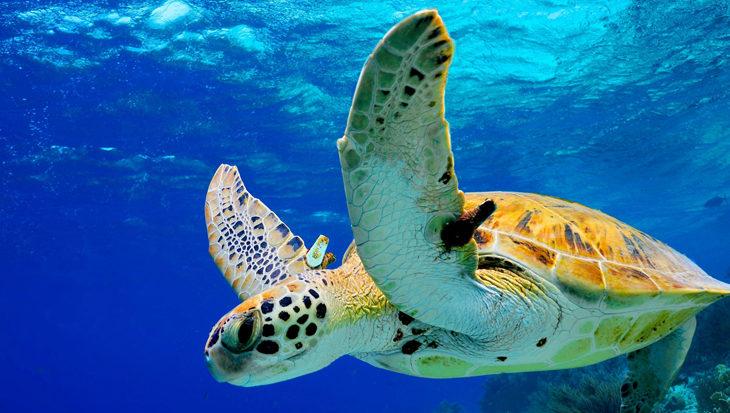Hotspots Bonaire om zeeschildpadden te spotten