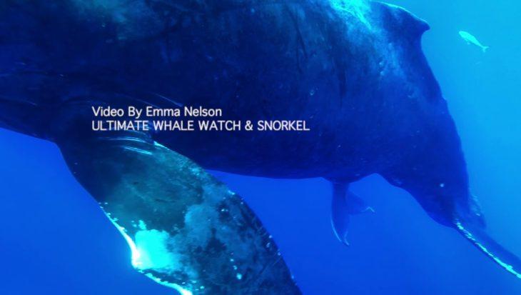 Uniek: beelden bultrugwalvis die aan het baren is