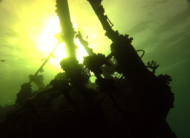 duikcomputer