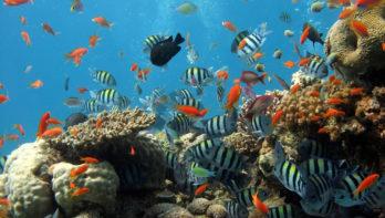 Het leven in de oceanen is diverser dan ooit