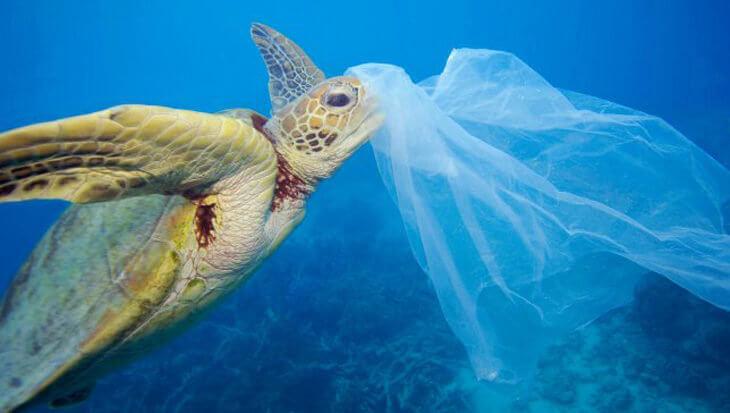 Zeeschildpadden aangetrokken door plastic omdat het naar eten ruikt