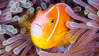 Help het behoud van koraalriffen te verbeteren