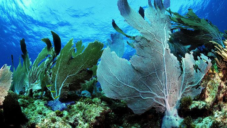 Zonnebrand beschadigt warmwaterkoraal nog meer