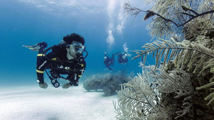 duikverzekering