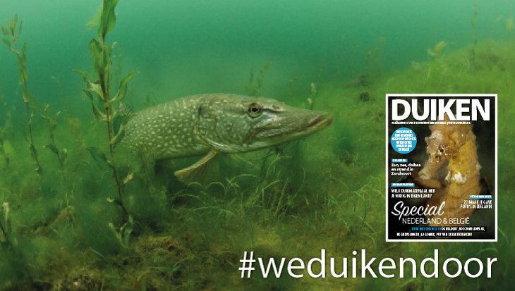 Digitaal magazine duiken in Nederland en België