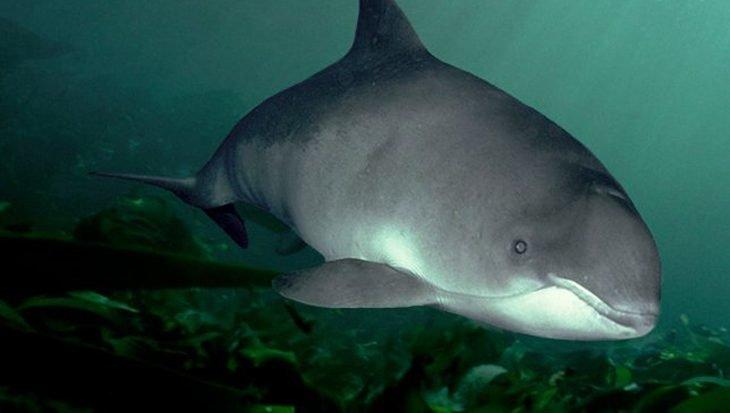 Stillere zee zegen voor de bruinvis