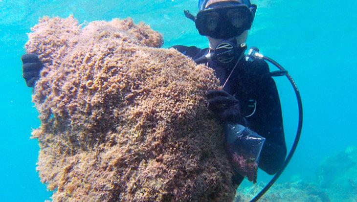Nieuw algensoort rekent genadeloos af met koraal