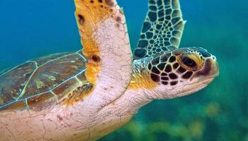 zeeschildpad Bonaire