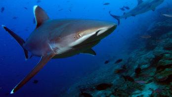 Haai Five! Het was Shark Awareness Day