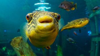 Niet op vakantie? Duik tussen tropische vissen in Beringen!