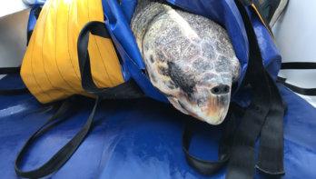 De waanzinnige reis van een zeeschildpad