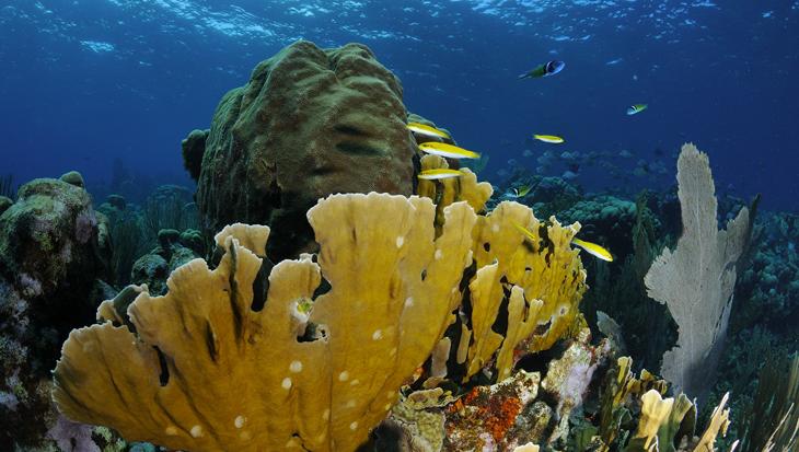 Reizen naar Curaçao tijdens corona: wat moet je allemaal regelen?